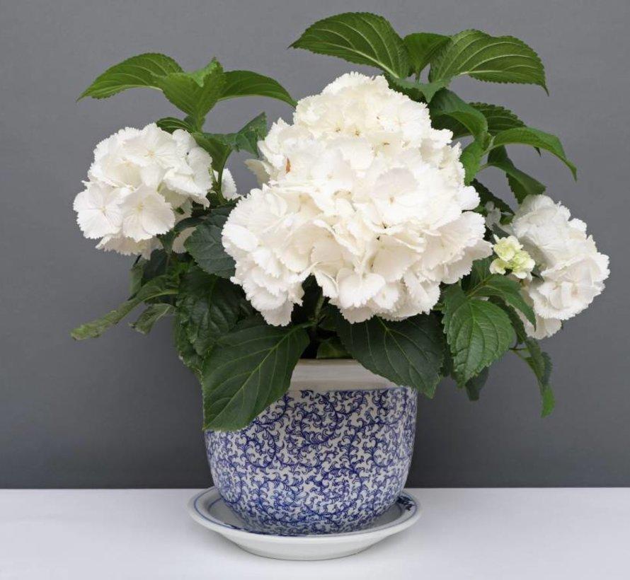 China Porzellan Blumentopf Blau-Weiß schnecken Blätter Ø 20cm