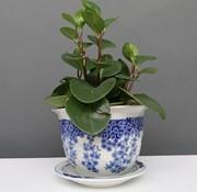 Yajutang Blumentopf Blau-Weiß mit Schmetterling Ø24