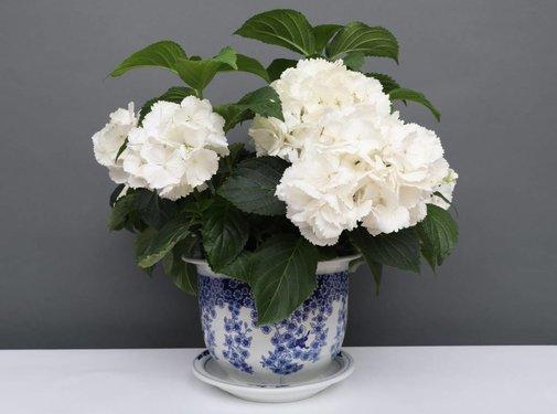 Yajutang Flowerpot Blue-White & Butterfly Ø20