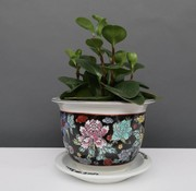 Yajutang Flowerpot black & colorful flowers Ø17