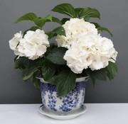 Yajutang Blumentopf Blau-Weiß & Schmetterling Ø33