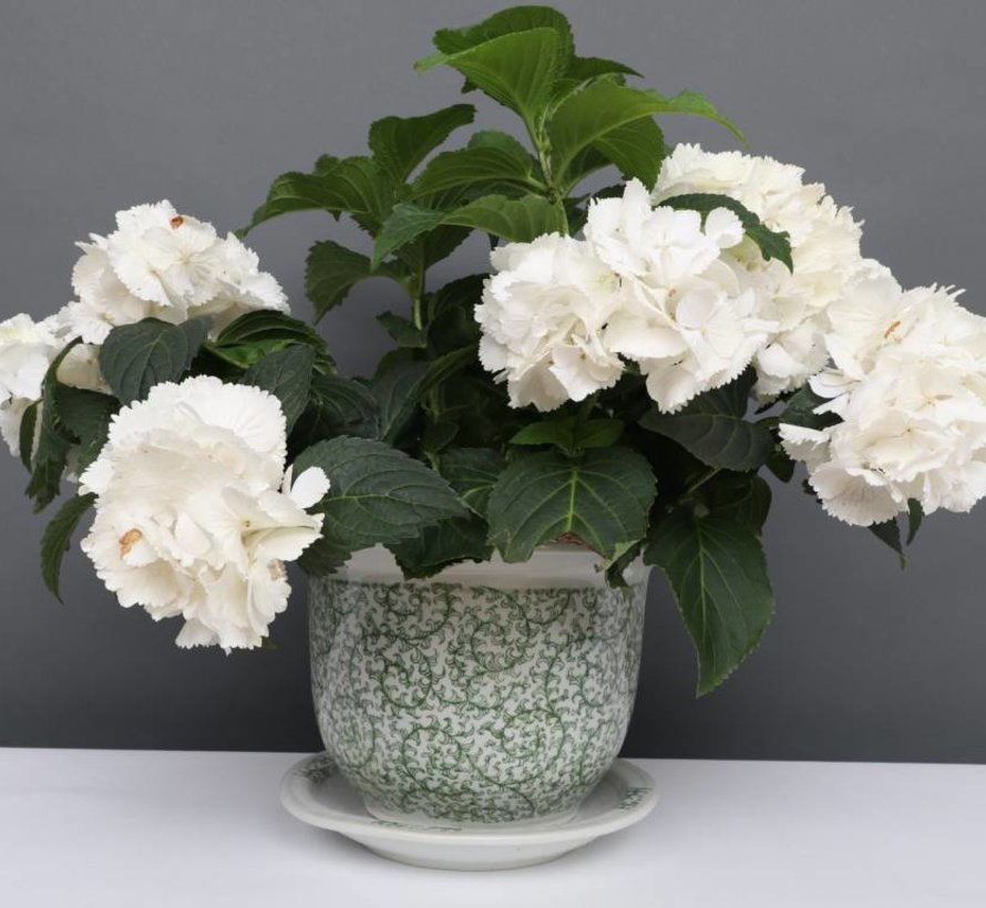 China Porzellan Blumentopf Weiß-Grün schnecken Blätter Ø 33cm