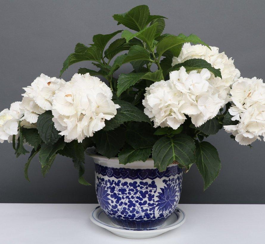 China Porzellan Blumentopf Blau-Weiß mit Lotusblumen Ø 33cm