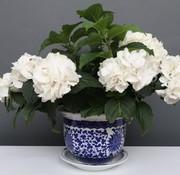 Yajutang Blumentopf Blau-Weiß Lotusblumen Ø28