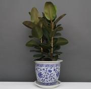 Yajutang Flowerpot Blue-White Carnation flower Ø33