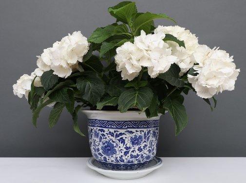 Yajutang Blumentopf Blau-Weiß Nelken blumen Ø28