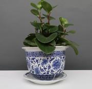 Yajutang Flowerpot Blue-White Carnation flowers Ø17