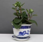 Yajutang Flowerpot Blue-White with Landscape Ø17
