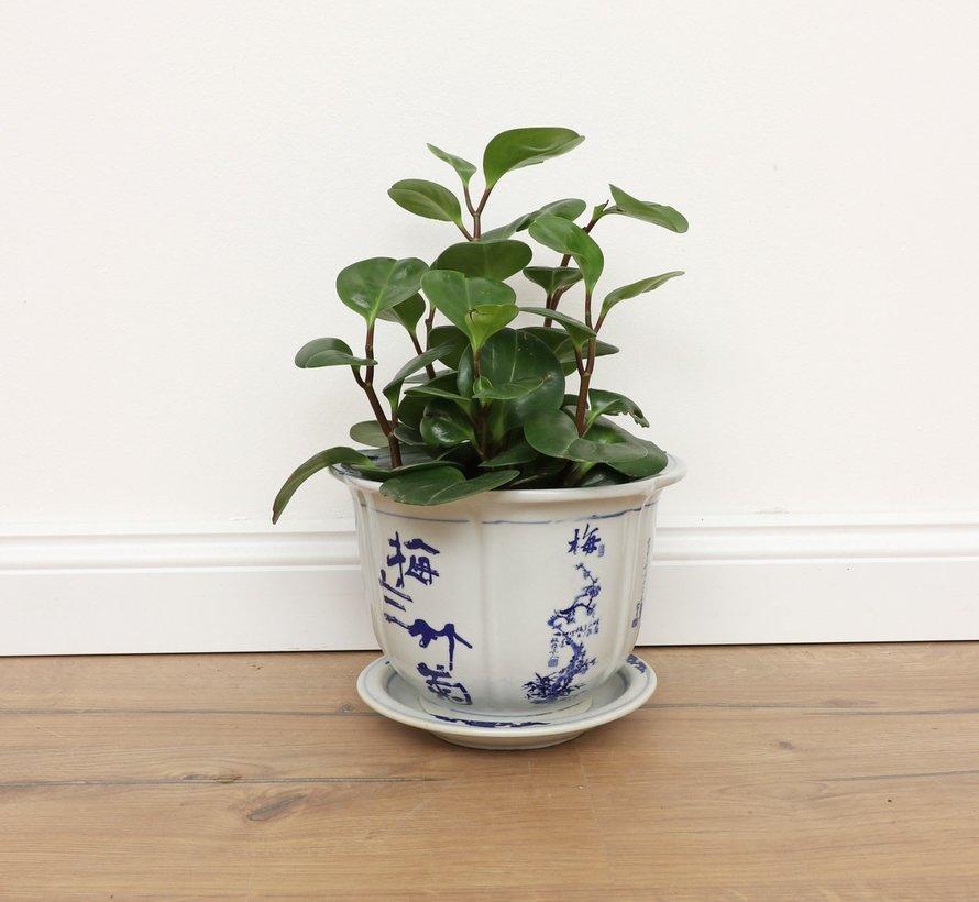 Porzellan Blumentopf mit Pflaume Orchidee Bambus Chrysantheme Ø13