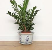 Yajutang Topf Pflaume Orchidee Bambus Chrysanthem