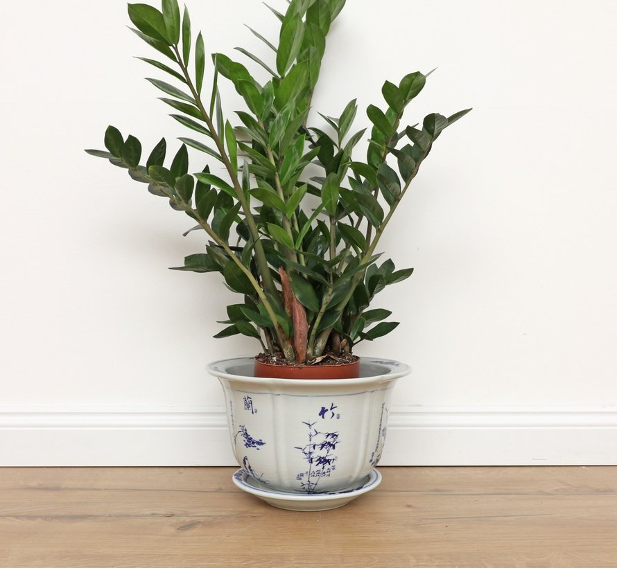 Porzellan Blumentopf mit Pflaume Orchidee Bambus Chrysantheme Ø23