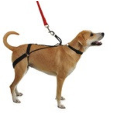 Horgan Harness No Pull Back Leg Dog Harness, Small