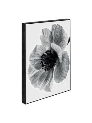 Incado Blocks 15x21 Secret Garden Poppy