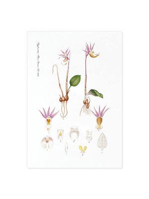 Incado Kunst Kaart 15x21 Flora Danica 15