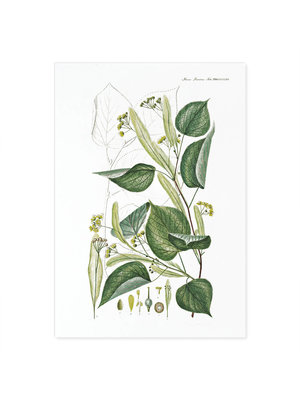 Incado Kunst Kaart 15x21 Flora Danica Flora Danica 24