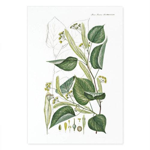 Incado Kunst Kaart 15x21 Flora Danica 24