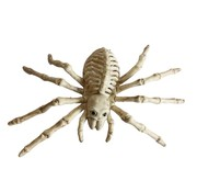 Joni's Halloween Shop Spin skelet van plastic 23 cm