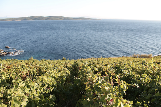 Hvar vineyard