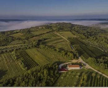 Clai vineyards