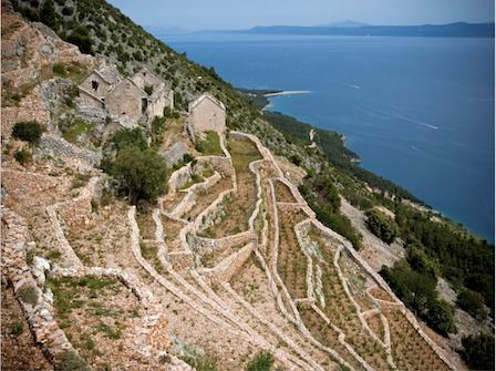 Stina Stipancic vineyard