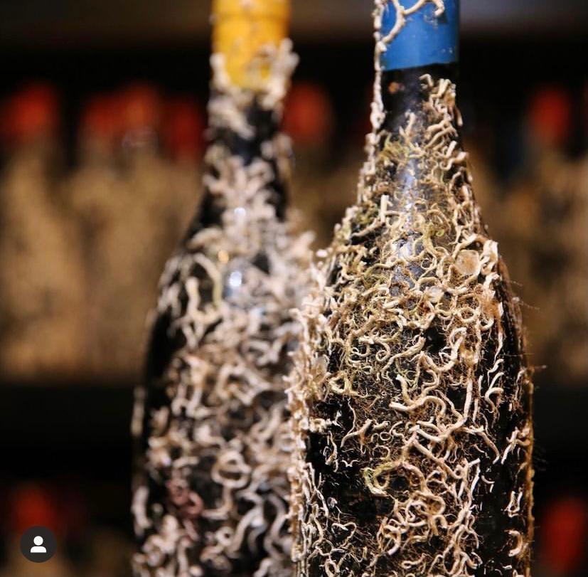 Coral Wine Ex Cathedra