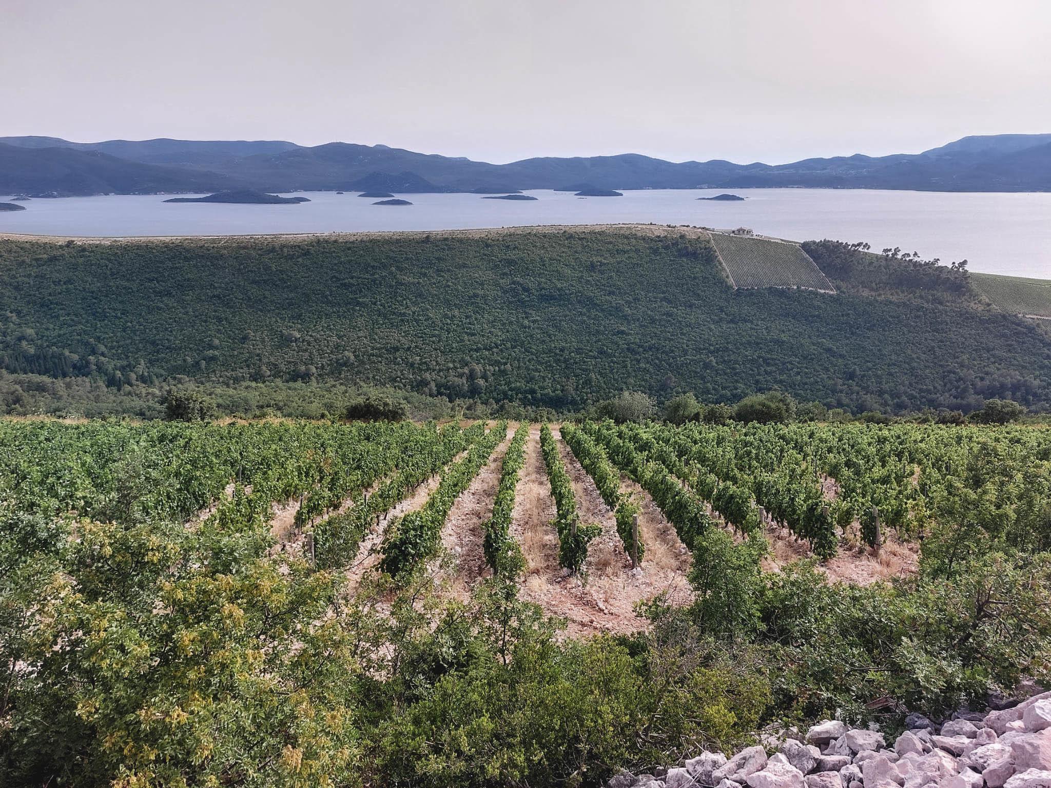 Komarna vineyards