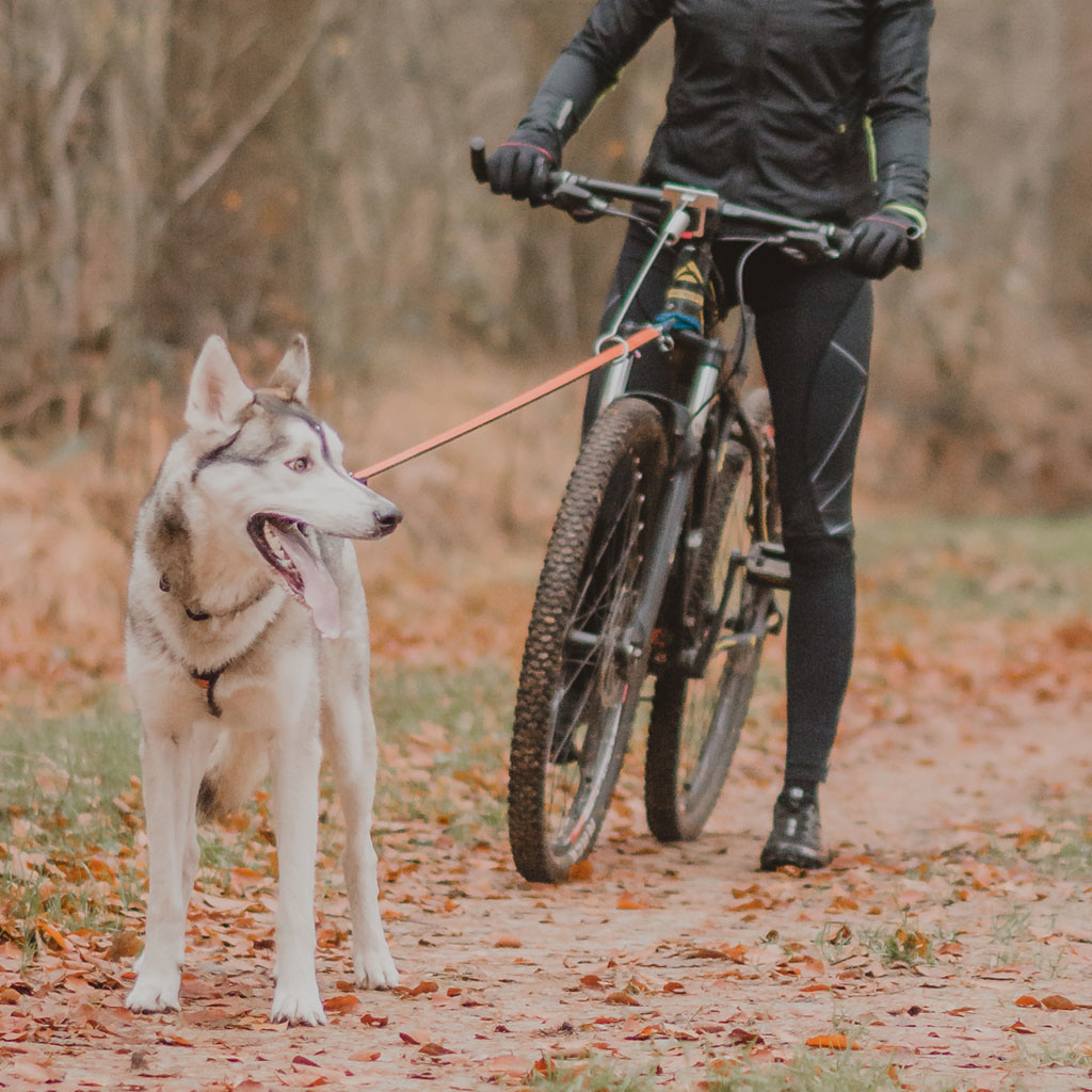Non-Stop Bike Antenna KlickFix-3