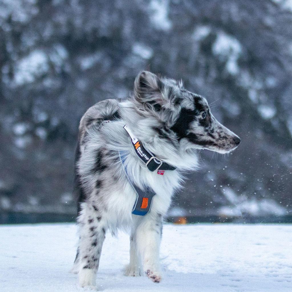 Non-stop Polar Click Collar-3