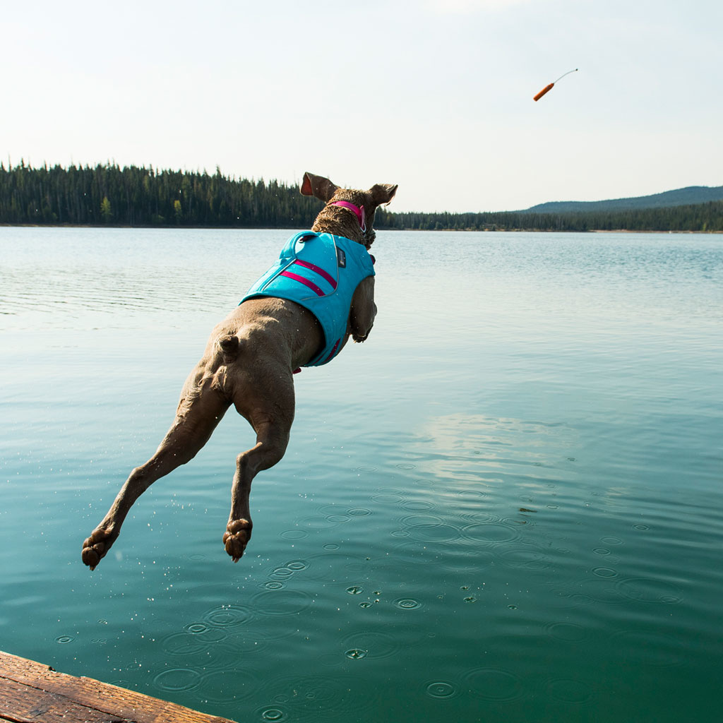 Ruffwear Float Coat™ Dog Life Jacket-5