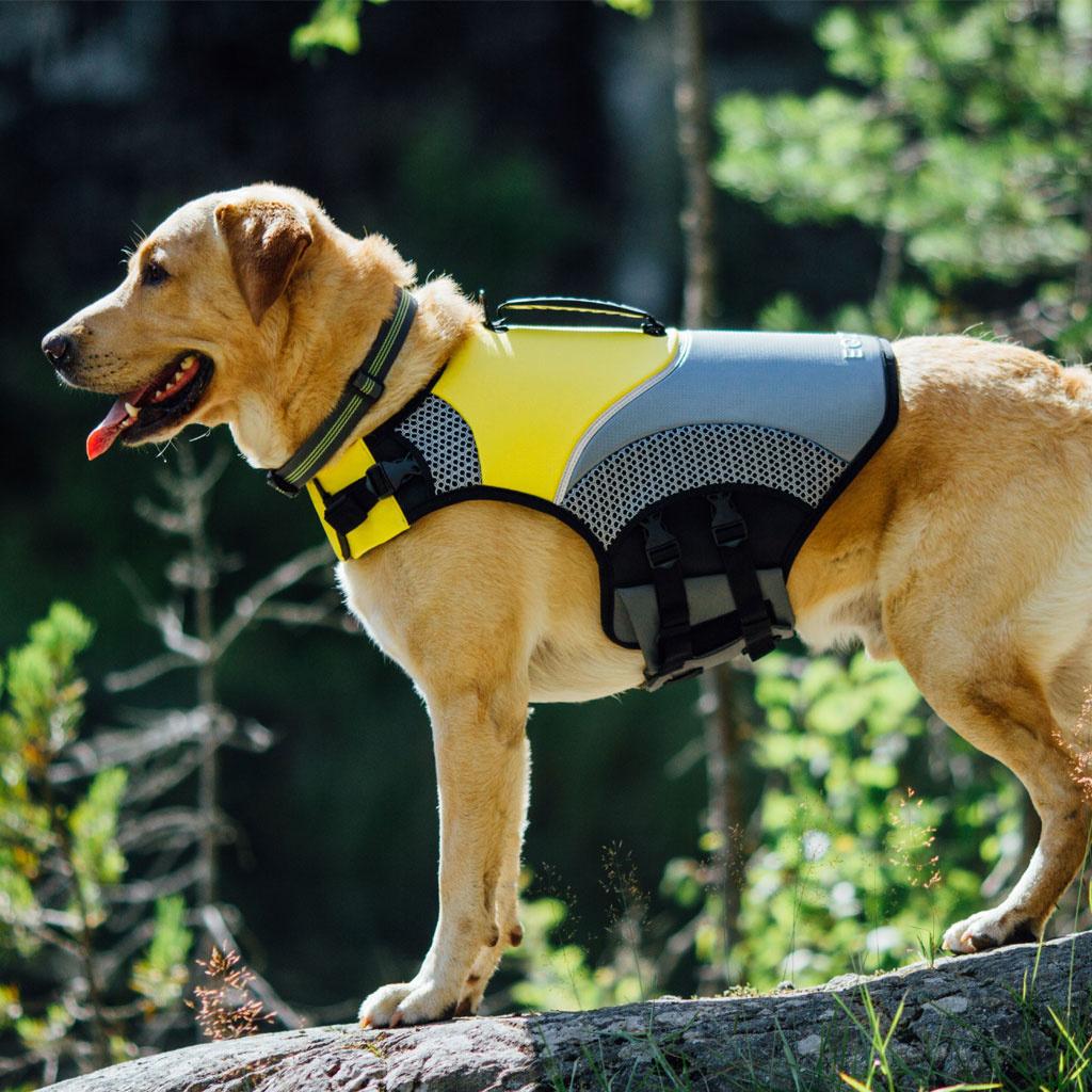 EQDOG Pro Life Vest-3