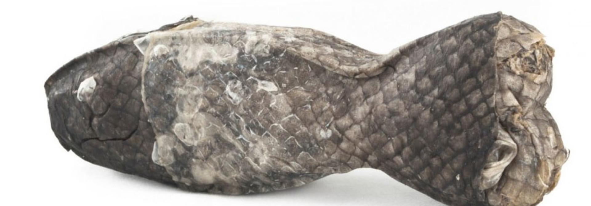 IcePaw Salmon Chewing Bone