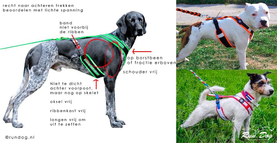 sportharnas-hond