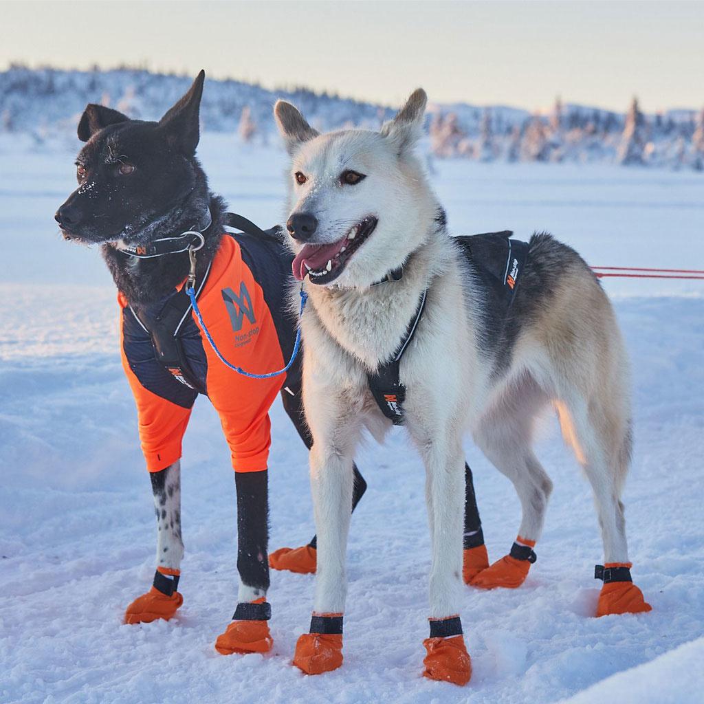 Non-stop Nansen Nome Harnas 5.0-4