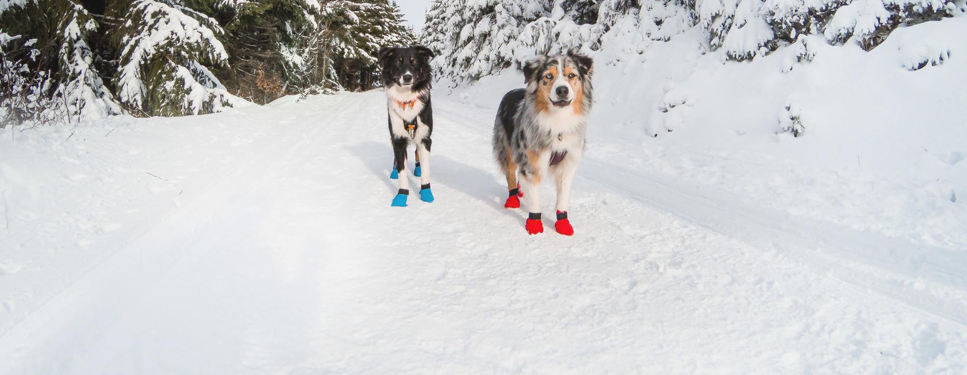 Honden Schoentjes