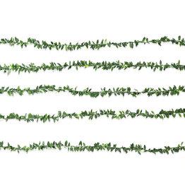 Kikkerland lichtslinger - bladen