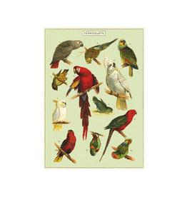 Cavallini decoratieve poster - papegaai