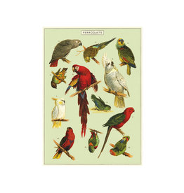 Cavallini decorative wrap - parrot