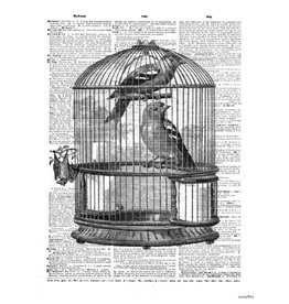 Vanilla Fly poster - birds in cage