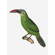 Vanilla Fly poster - bird (green)