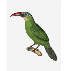 Vanilla Fly poster - vogel (groen)