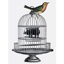 Vanilla Fly poster - bird on cage