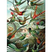 Vanilla Fly poster - birds
