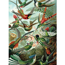Vanilla Fly poster - vogels