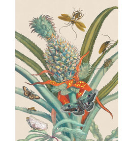 Vanilla Fly poster - botanical