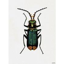 Vanilla Fly poster - bug