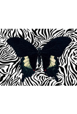 Vanilla Fly poster - butterfly