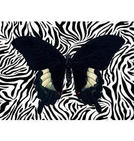 Vanilla Fly poster - vlinder