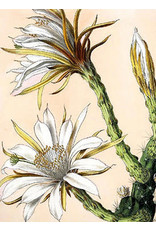 Vanilla Fly poster - cactus (white)
