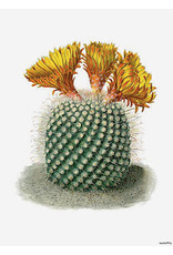 Vanilla Fly poster - cactus (orange)