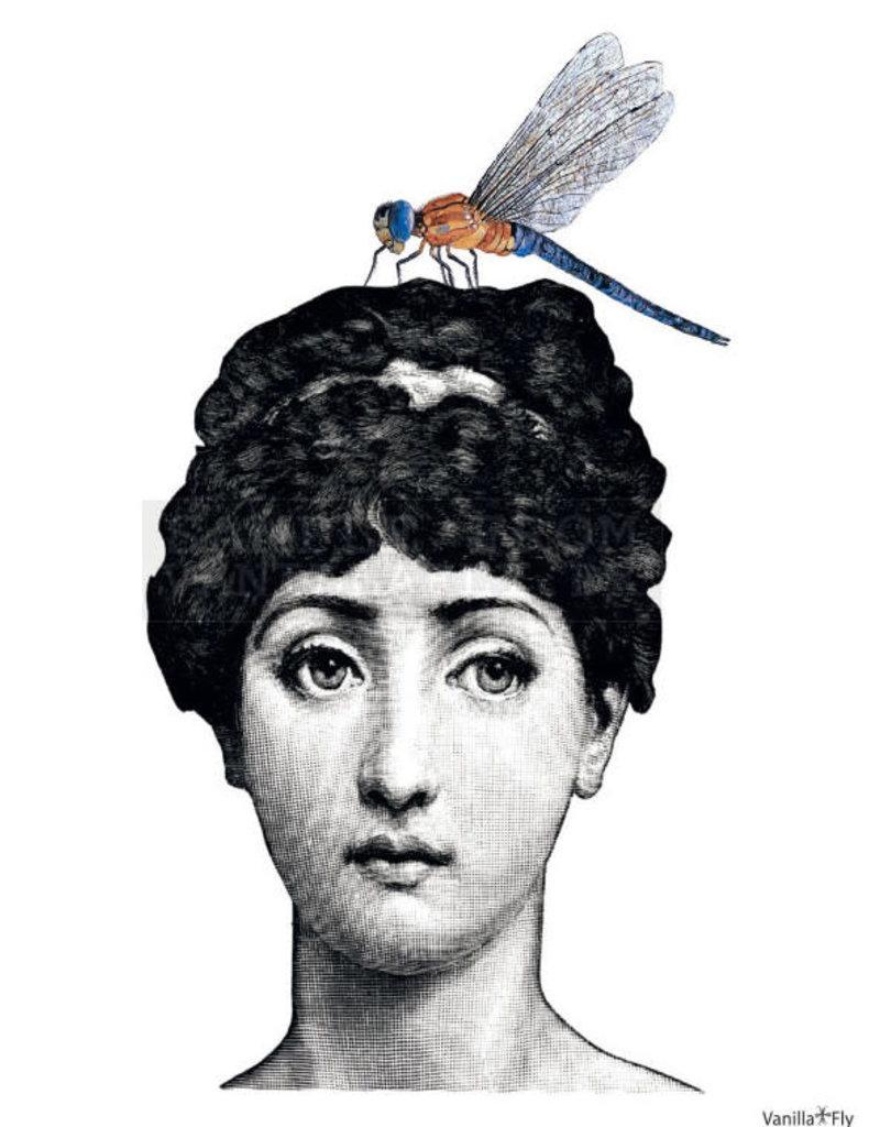 Vanilla Fly poster - dragonfly